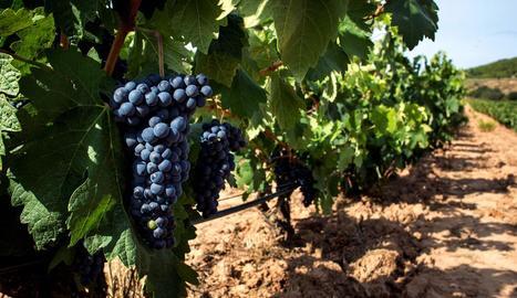 Els vins, a més de l'oli, es presenten com els grans perjudicats per la pujada d'aranzels.
