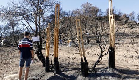 Una trentena d'artistes van començar ahir a crear a l'àrea afectada per l'incendi a prop de Maials.