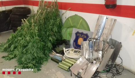 Denunciats dos homes per una plantació de marihuana a l'Alta Ribagorça
