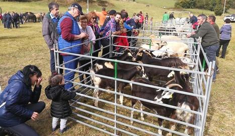 Al matí també es va celebrar el 33 concurs de bestiar.