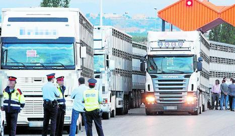 Imatge d'arxiu d'una inspecció de camions amb porcs.