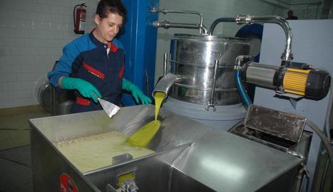 Imatge d'arxiu d'elaboració d'oli d'oliva verge extra.