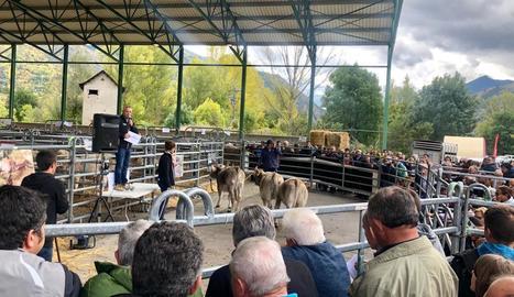 Els exemplars de vaca bruna van partir d'un preu de 650 euros en la subhasta.
