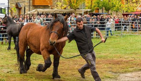 Mostra de cavalls durant la fira.