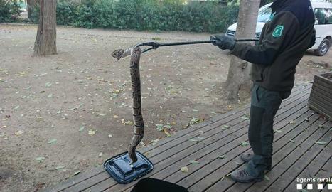 Troben una serp pitó a la canalització del riu a Lleida