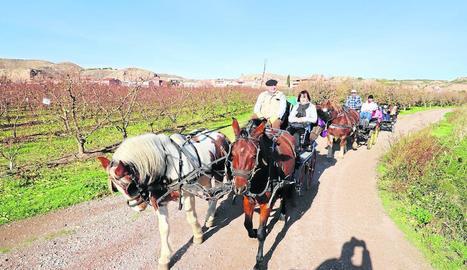 Imatge dels passejos en carro que es van organitzar ahir pels camps de fruiters d'Aitona.