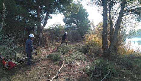 Imatge de la brigada de neteja forestal d'Almacelles.