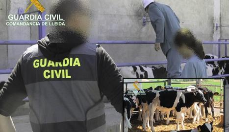 La Guàrdia Civil durant una de les inspeccions a les explotacions ramaderes.