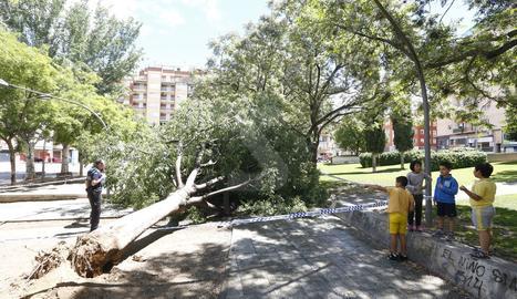 Imatge d'arxiu d'un arbre caigut a Lleida durant un temporal de vent.