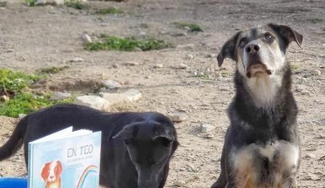 Teo, protagonista del conte, es basa en la història d'un gos que va passar per la protectora.