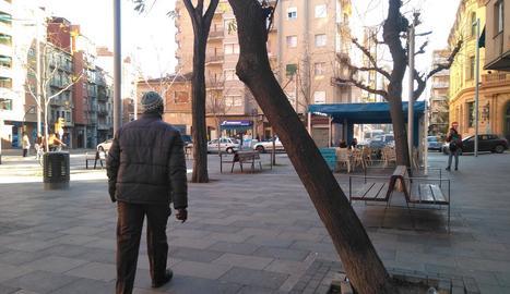L'associació de veïns del Clot alerta d'un arbre molt inclinat a la plaça del Treball.