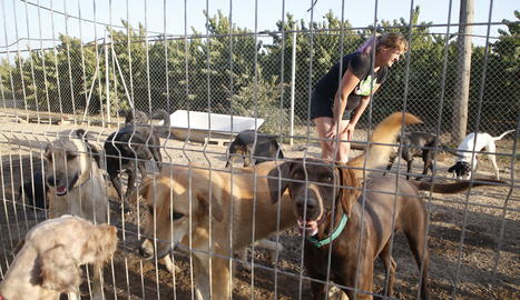 Gossos en una protectora d'animals.