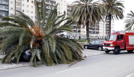 A Mataró, una palmera va caure pel fort vent sobre un cotxe i va ferir el conductor.