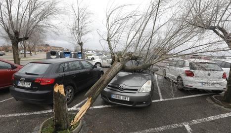 Un arbre va caure ahir sobre un cotxe al pàrquing d'INEFC a Lleida.