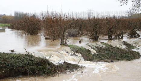 Imatges dels desperfectes del temporal Glòria a les comarques de Lleida