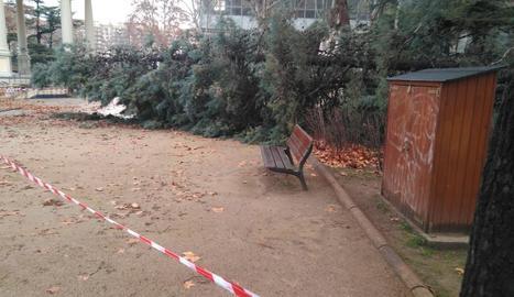 Un arbre de grans dimensions va caure als Camps Elisis.