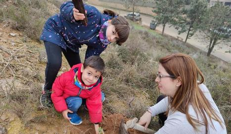 Planten unes 300 alzines en la Noguera