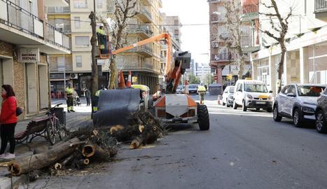 Talen quatre arbres al barri de Cappont per prevenció