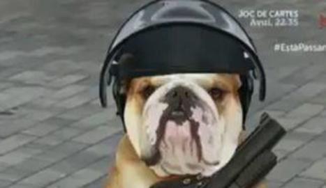 El presentador Toni Soler i la imatge del gos que es va emetre.