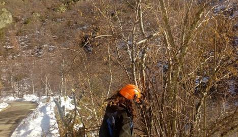 Reparen els efectes del temporal al Parc Natural de l'Alt Pirineu