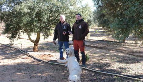 Jesús i Dídac, de l'empresa Tòfona de la Conca, amb dos dels seus gossos tofonaires a la finca de Tarrés.