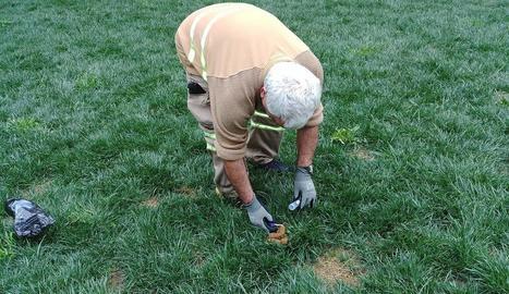 Un treballador municipal recollint una mostra d'excrements.