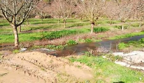 Alguns camps de Maials negats per l'aigua.