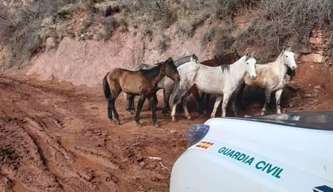 Denuncien una explotació ramadera de Soriguera pel mal estat de vuit cavalls