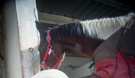 competició. És important que els cavalls d'alt rendiment esportiu estiguin en mans de ferradors qualificats per tal de prevenir i evitar lesions.