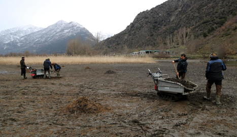 Retiren més de 300 tones d'una planta aquàtica invasora del pantà de la Torrassa