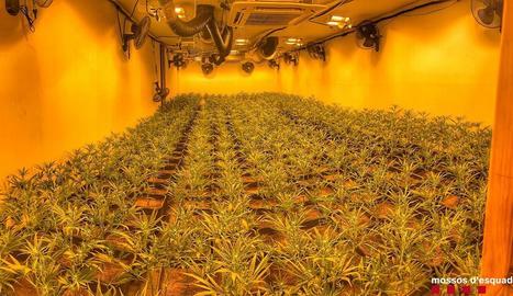 Les plantes eren en una sala amb una complexa instal·lació.