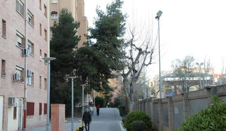 """Veïns de Pius XII alerten que tres pins estan """"a punt de caure"""""""
