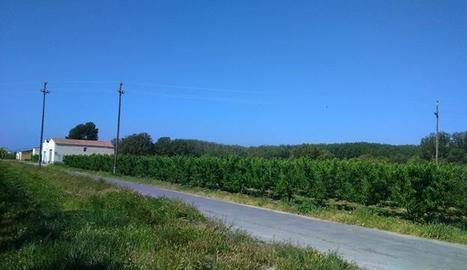 La línia elèctrica que subministra a Aitona, entre altres pobles.