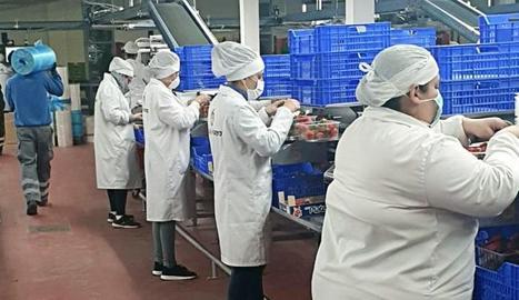 Els problemes de falta de mà d'obra ja es deixen sentir en el sector fructícola del sud de l'Estat.