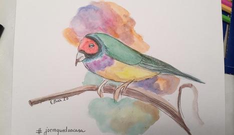 Aquest ocell està elaborat amb llapissos aquareables i tinta.