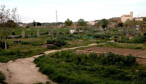 Els horts urbans ubicats al barri de Pardinyes de Lleida, ahir a la tarda deserts.