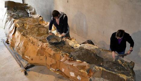 Imatge d'arxiu de la restauració del coll de dinosaure.