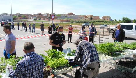 Persones a la llarga cua per comprar planter per als seus horts.