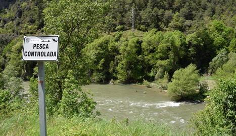 Imatge d'una de les zones controlades de pesca a l'Alt Urgell.