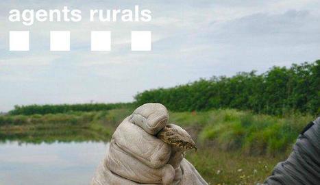 Vista de la serp d'aigua rescatada pels Agents Rurals.