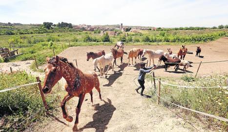 L'Associació per la Recuperació i Rehabilitació d'Equins (ARRE) acull actualment quinze cavalls al refugi d'Alcanó.