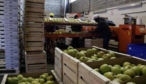 Imatge de preparació de palets amb pomes.
