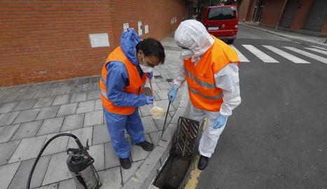 Moment en què els tècnics introdueixen un insecticida en un embornal d'un carrer de Pardinyes.