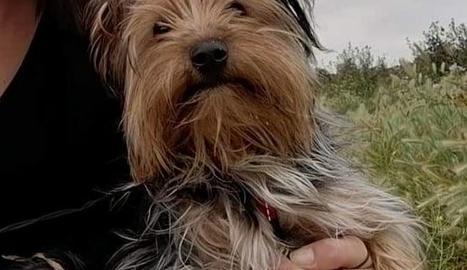 El Rayo és un dels gossos que han mort.