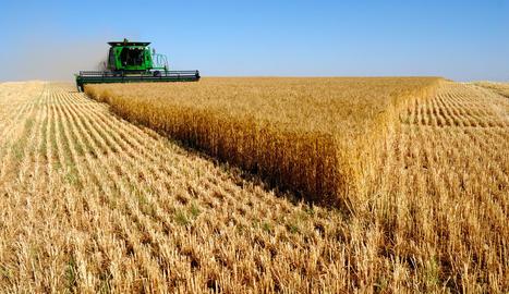 Conreus, producció i excés de pluja