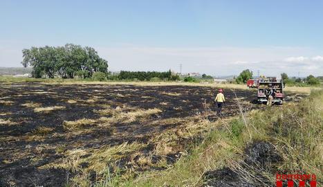 Incendi a la zona de la Devesa de Juneda