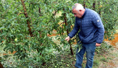 La pedregada deixa danys de fins el 100% en poma i pera a l'Urgell