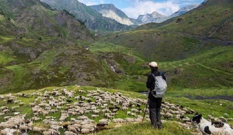 Un pastor amb un ramat d'ovelles.