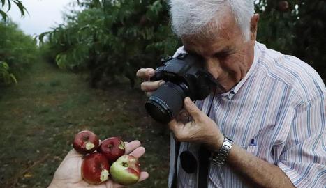 La fruita en aquests arbres de Soses va quedar destrossada. Un productor de Torres de Segre fotografia producció arruïnada a la finca.