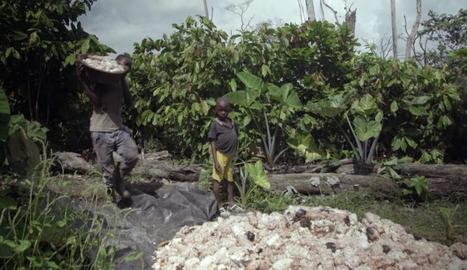 La indústria es va comprometre a acabar amb el treball infantil.